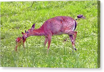 Canvas Print - Springtime New Beginning - Doe And Her Fawn  by Patricia Keller