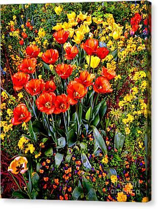 Springtime Canvas Print by Olivier Le Queinec