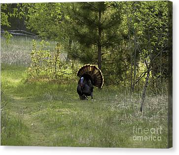 Springtime Performance Canvas Print by Teresa A and Preston S Cole Photography