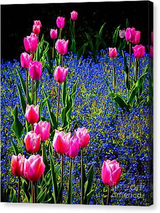 Springtime Tulips Canvas Print by Olivier Le Queinec