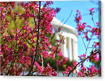Canvas Print featuring the photograph Springtime Vibe by Mitch Cat