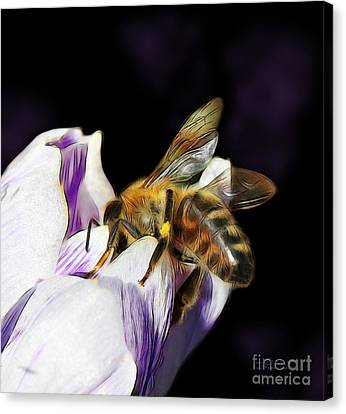 Springtime Visitor Canvas Print