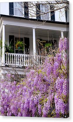 Wisteria In Bloom Canvas Print - Springtime Wisteria In Bloom by Dawna  Moore Photography