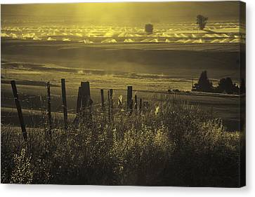 Sprinklers At Sunrise In The Wallowa Valley Canvas Print by Alvin Kroon