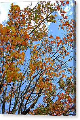 Canvas Print - Sprinkles Of Autumn by Guy Ricketts