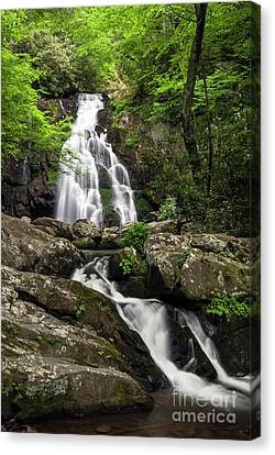 Canvas Print featuring the photograph Spruce Flats Falls - D009919 by Daniel Dempster