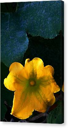 Canvas Print featuring the photograph Squash Blossom by Lenore Senior