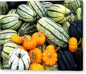 Squash Harvest Canvas Print by Will Borden