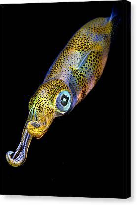 Squid At Night Canvas Print by Rico Besserdich