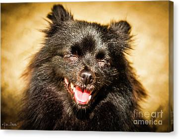 Squinting Pooch Canvas Print by Julian Starks