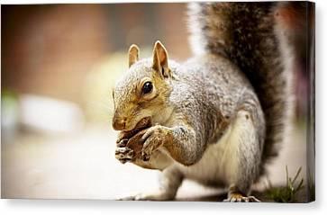 Squirrel Canvas Print - Squirrel                      by F S