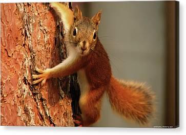 Squirrel Canvas Print - Squirrel  1920x1200 009 by Mery Moon