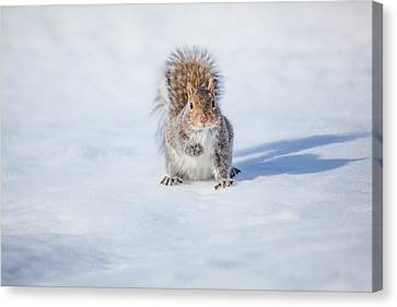 Squirrel And His Shadow Canvas Print by Karol Livote