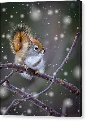 Squirrel Balancing Act Canvas Print