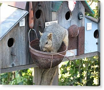 Squirrel Feeding Canvas Print by Patricia Barmatz