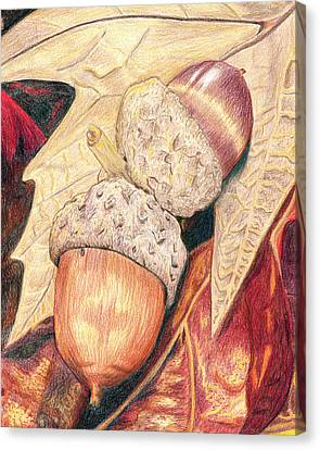 Squirrel Food Canvas Print