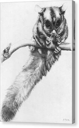 Canvas Print featuring the drawing Squirrel Glider by Shawna Rowe