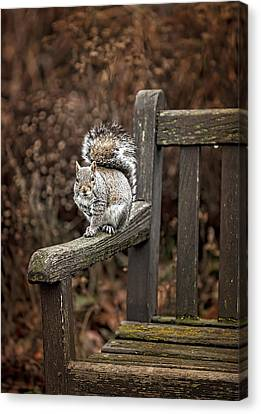 Squirrel  Canvas Print by Gouzel -