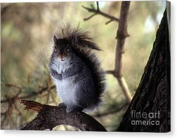 Squirrel In The Garden Canvas Print