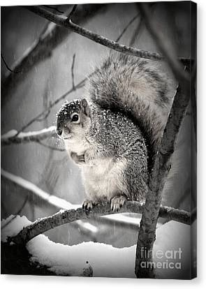 Canvas Print featuring the photograph Squirrel  In The Maple Tree 2 by Lila Fisher-Wenzel