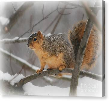 Canvas Print featuring the photograph Squirrel  In The Maple Tree 3 by Lila Fisher-Wenzel