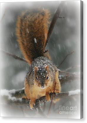 Canvas Print featuring the photograph Squirrel  In The Maple Tree by Lila Fisher-Wenzel