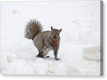 Canvas Print featuring the photograph Squirrel In Winter Snow by Charline Xia