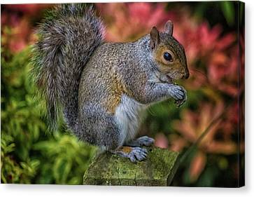 Squirrel Canvas Print by Martin Newman