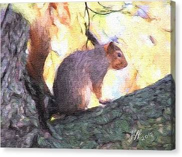 Squirrel On A Limb Canvas Print by Jeff Burns
