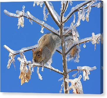 Canvas Print featuring the photograph Squirrel On Icy Branches by Doris Potter