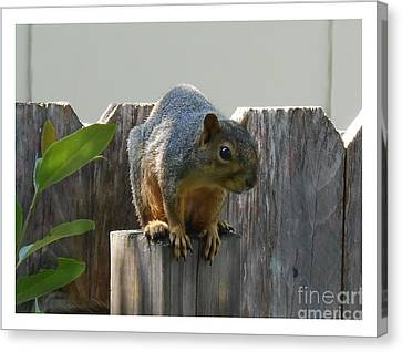 Canvas Print featuring the photograph Squirrel On Post by Felipe Adan Lerma
