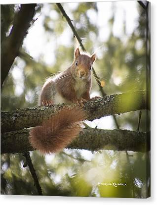 Squirrel On The Spot Canvas Print by Stwayne Keubrick
