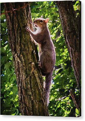 Squirrel On Tree - Paint Fx Canvas Print by Brian Wallace