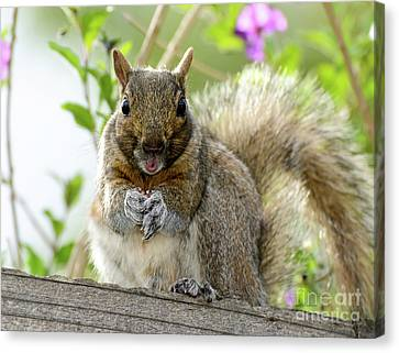 Canvas Print featuring the photograph Squirrel Ready To Whistle by Susan Wiedmann