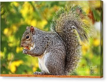 Bushy Tail Canvas Print - Squirrel Snack by Anna Sheradon