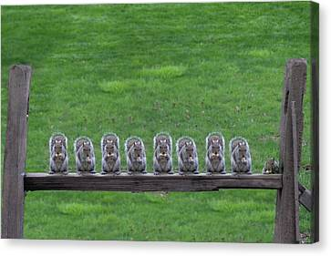 Canvas Print - Squirrels Lined Up by Dan Friend