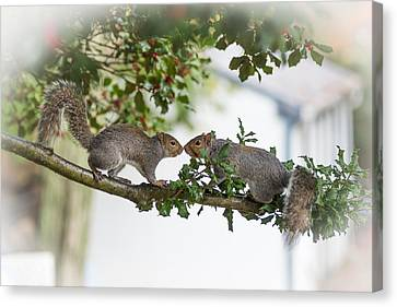 Squirrels Nose To Nose Canvas Print