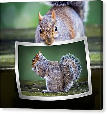 Squirrely Critique Canvas Print by Brian Wallace