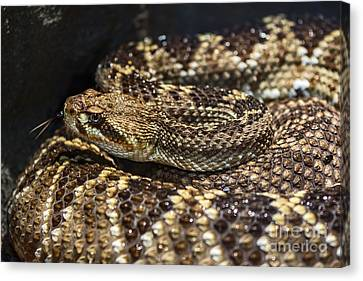 Sssssnake Canvas Print by Jamie Pham