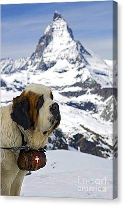 Keeper Canvas Print - St Bernard Dog Posing In Front Of The Matterhorn by Henk Meijer Photography