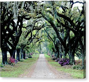 St Francisville Plantation Canvas Print