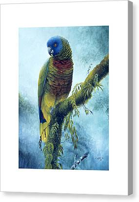 St. Lucia Parrot - Majestic Canvas Print by Christopher Cox