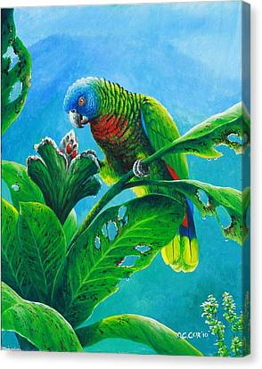 St. Lucia Parrot And Bwa Pain Marron Canvas Print by Christopher Cox