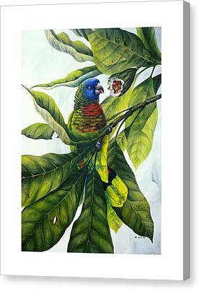 St. Lucia Parrot And Fruit Canvas Print by Christopher Cox