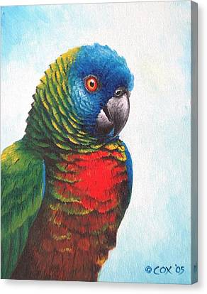St. Lucia Parrot Canvas Print by Christopher Cox