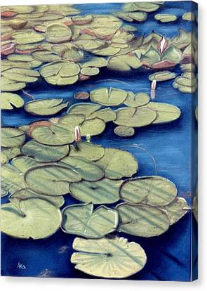 St. Marks Waterlilies Canvas Print by Jan Amiss