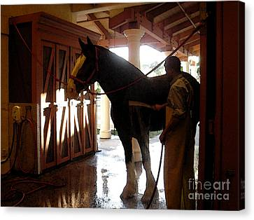 Stable Groom - 1 Canvas Print by Linda Shafer