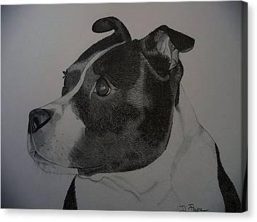 Staffie The Dog Canvas Print