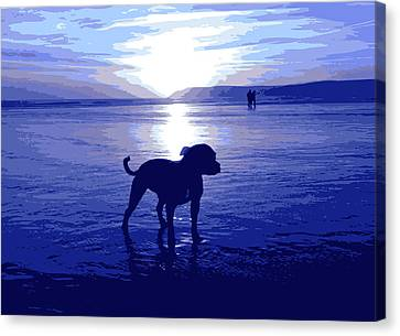 Staffordshire Bull Terrier On Beach Canvas Print