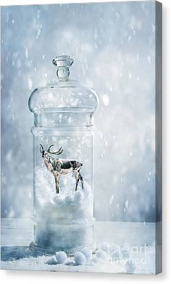 Stag In A Snow Globe Canvas Print